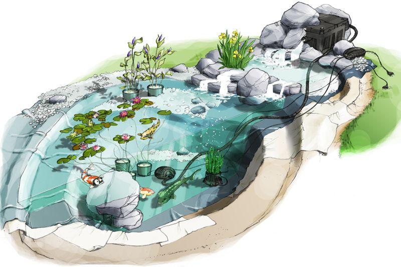 Schéma d'un bassin aquatique