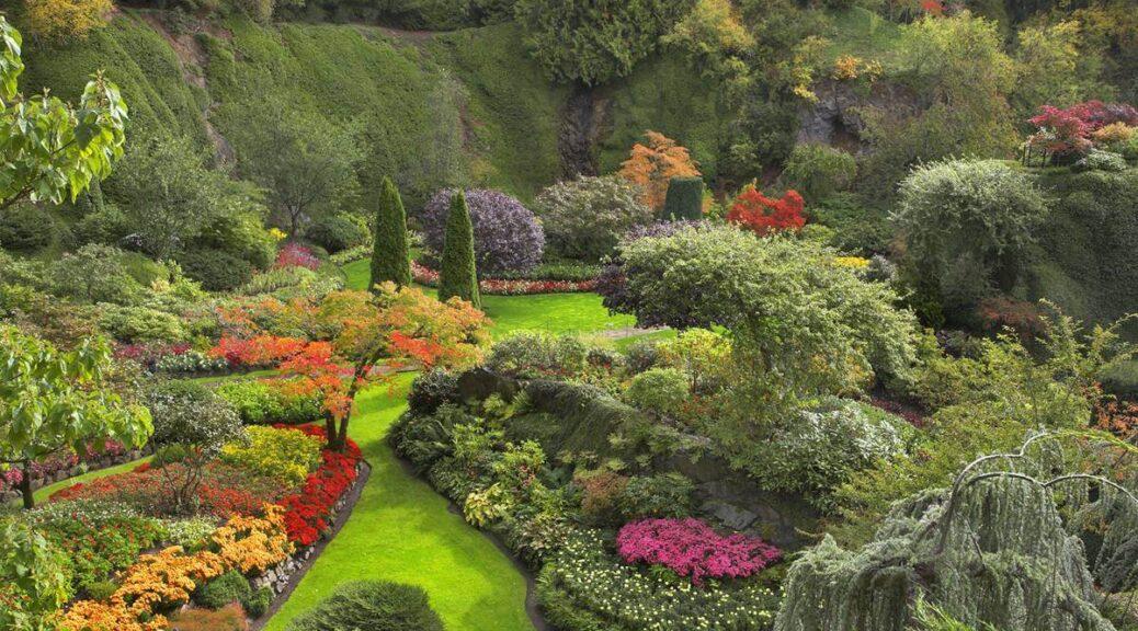 Les plus belles plantes pour colorer votre jardin