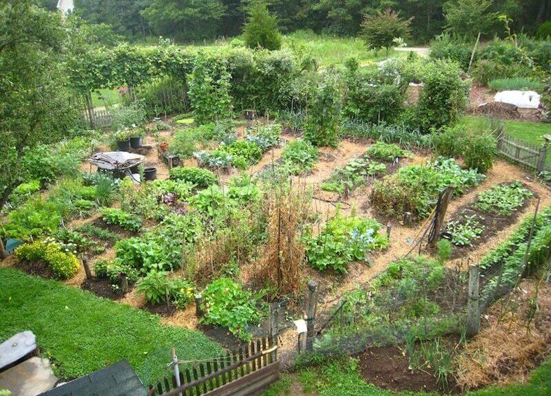 Jardin bio : ce qu'il faut faire