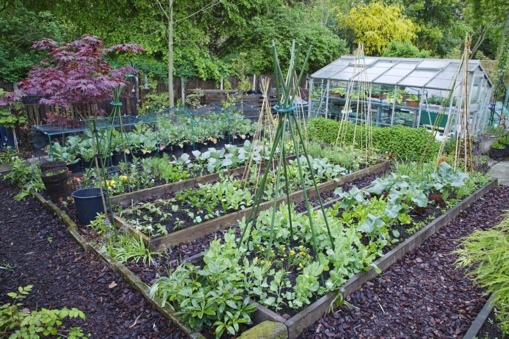Jardin écologique : une solution pour une bonne santé