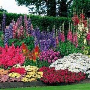 Massifs de fleurs et de plantes roses violet et bleue