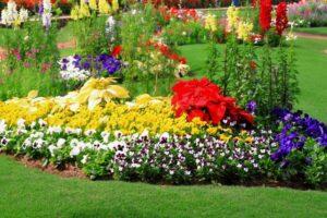 Massif de plantes colorées jaunes, rouges et blanches