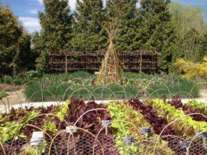 Plantation dans jardin bio